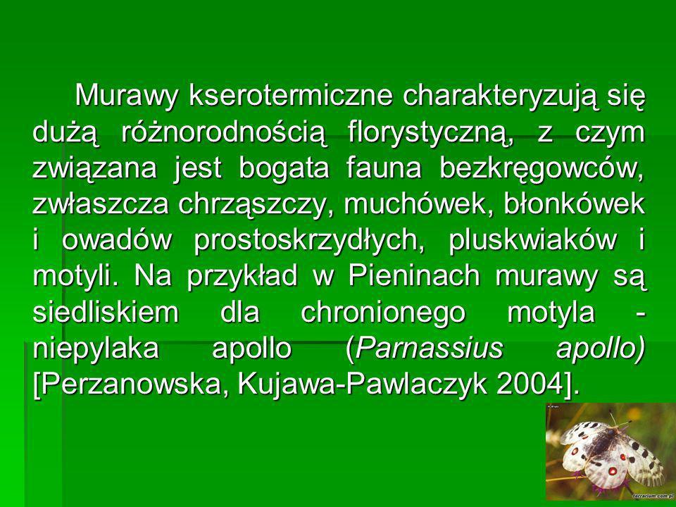 Reprezentatywne gatunki: Aster gawędka Aster amellus, Aster gawędka Aster amellus, oman wąskolistny Inula ensifolia, oman wąskolistny Inula ensifolia, len złocisty Linum flavum, len złocisty Linum flavum, len włochaty Linum hirsutum, len włochaty Linum hirsutum, dziewięćsił popłocholistny Carlina onopordifolia, dziewięćsił popłocholistny Carlina onopordifolia, szyplin jedwabisty Dorycnium germanicum, szyplin jedwabisty Dorycnium germanicum, storczyk purpurowy Orchis purpurea, storczyk purpurowy Orchis purpurea, mikołajek polny Eryngium campestre, mikołajek polny Eryngium campestre, miłek wiosenny Adonis vernalis, miłek wiosenny Adonis vernalis, wężymord stepowy Scorzonera purpurea, wężymord stepowy Scorzonera purpurea, sesleria błotna Sesleria uliginosa, sesleria błotna Sesleria uliginosa, turzyca niska Carex humilis, turzyca niska Carex humilis, ostnica Jana Stipa joannis, ostnica Jana Stipa joannis, lebiodka pospolita Origanum vulgare, lebiodka pospolita Origanum vulgare, czyściec prosty Stachys recta, czyściec prosty Stachys recta, czyścica storzyszek Clinopodium vulgare, czyścica storzyszek Clinopodium vulgare, kłosownica pierzasta Brachypodium pinnatum, kłosownica pierzasta Brachypodium pinnatum, komonicznik skrzydlastostrąkowy Tetragonolobus maritimussubsp.