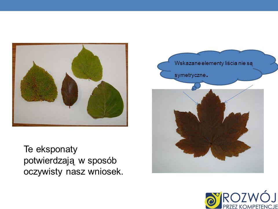Te eksponaty potwierdzają w sposób oczywisty nasz wniosek. Wskazane elementy liścia nie są symetryczne.