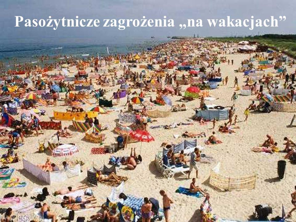 Pasożytnicze zagrożenia na wakacjach