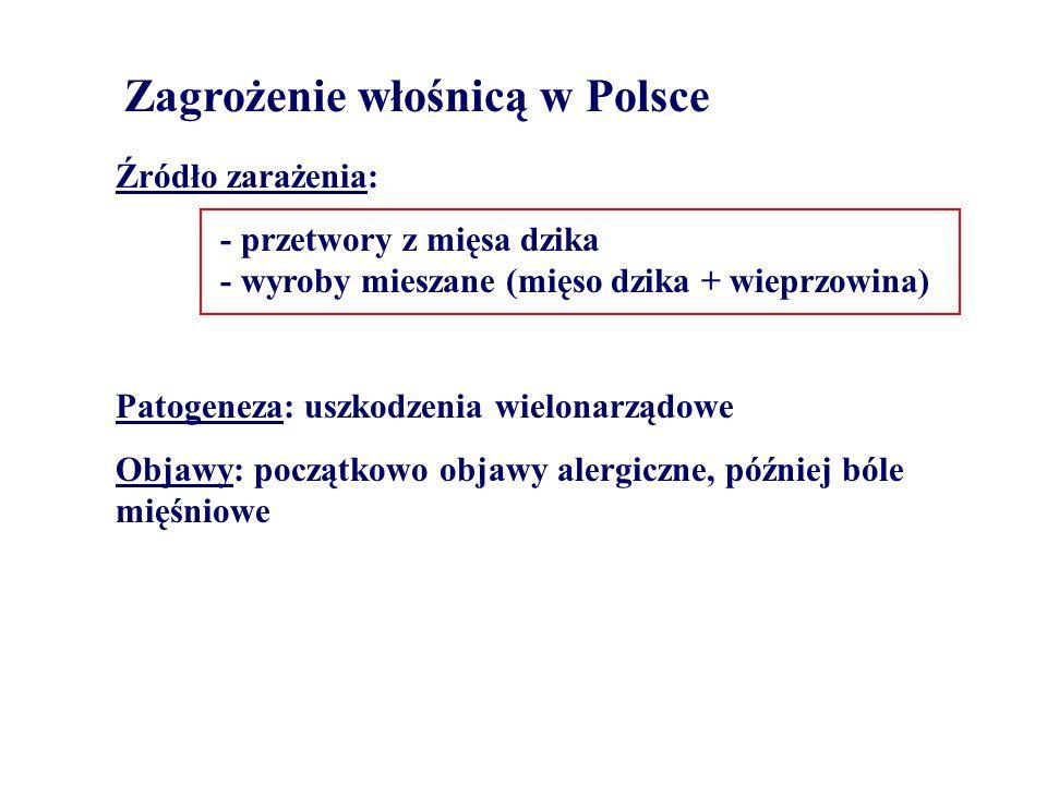 Zagrożenie włośnicą w Polsce Źródło zarażenia: - przetwory z mięsa dzika - wyroby mieszane (mięso dzika + wieprzowina) Patogeneza: uszkodzenia wielona