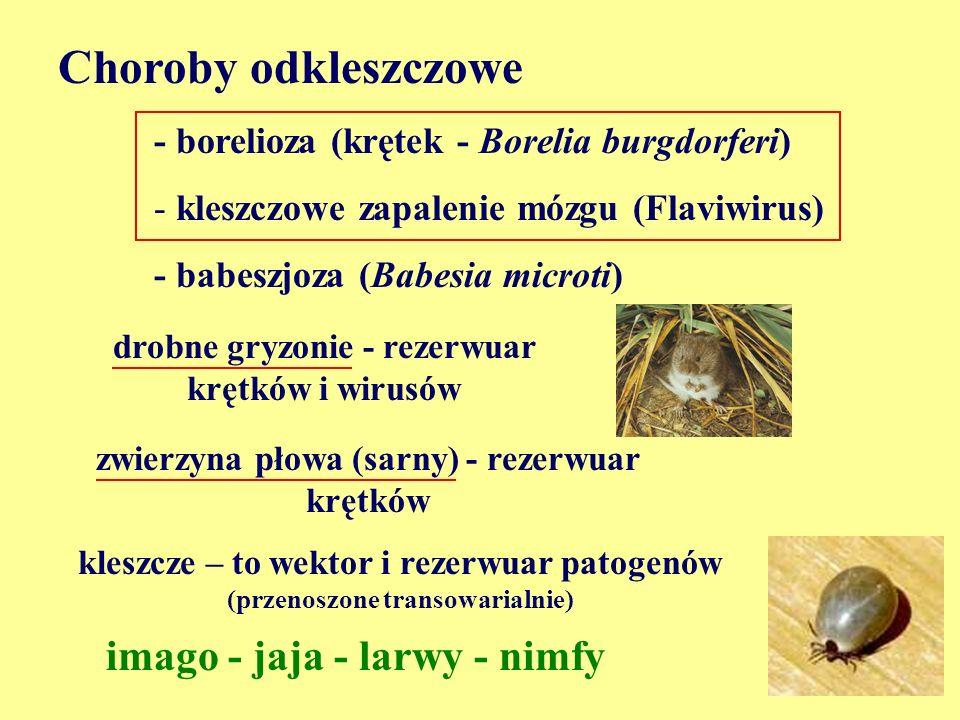 Choroby odkleszczowe - borelioza (krętek - Borelia burgdorferi) - kleszczowe zapalenie mózgu (Flaviwirus) - babeszjoza (Babesia microti) drobne gryzon