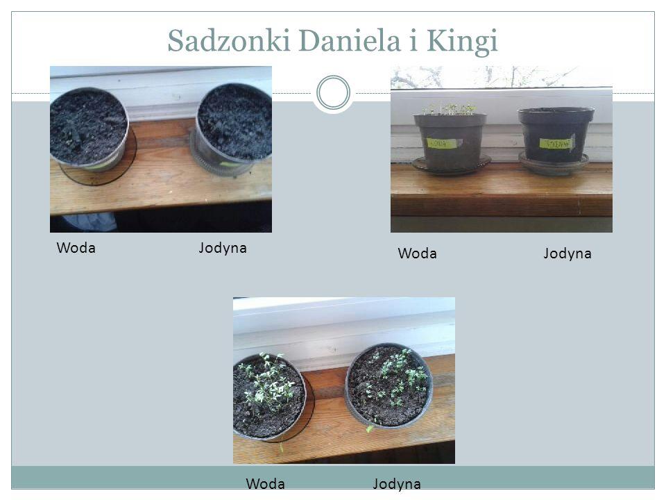 Sadzonki Daniela i Kingi Woda Jodyna