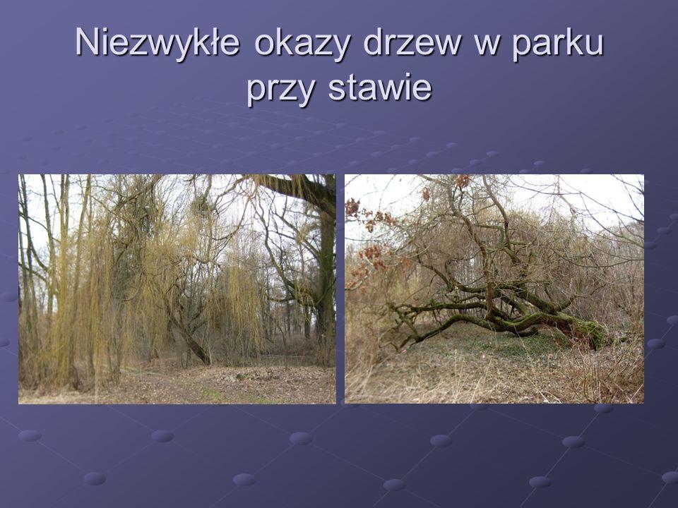 Niezwykłe okazy drzew w parku przy stawie