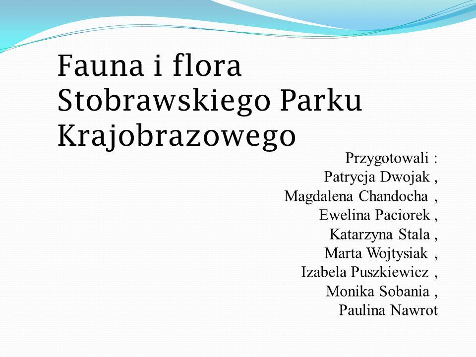 Fauna i flora Stobrawskiego Parku Krajobrazowego Przygotowali : Patrycja Dwojak, Magdalena Chandocha, Ewelina Paciorek, Katarzyna Stala, Marta Wojtysi
