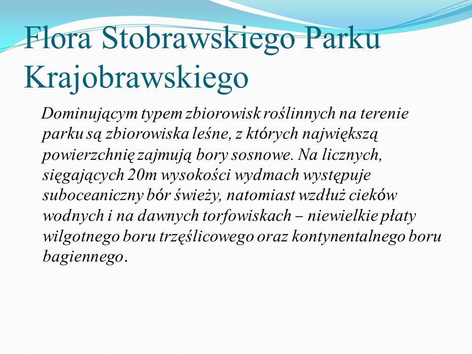 Flora Stobrawskiego Parku Krajobrawskiego Dominującym typem zbiorowisk roślinnych na terenie parku są zbiorowiska leśne, z kt ó rych największą powier