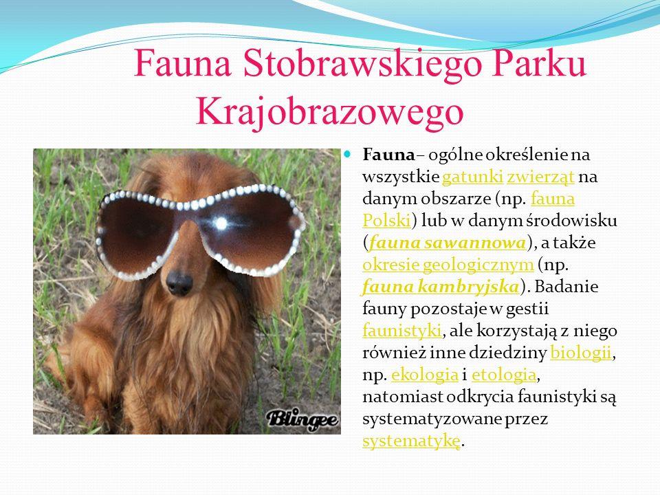 Fauna Stobrawskiego Parku Krajobrazowego Fauna– ogólne określenie na wszystkie gatunki zwierząt na danym obszarze (np. fauna Polski) lub w danym środo