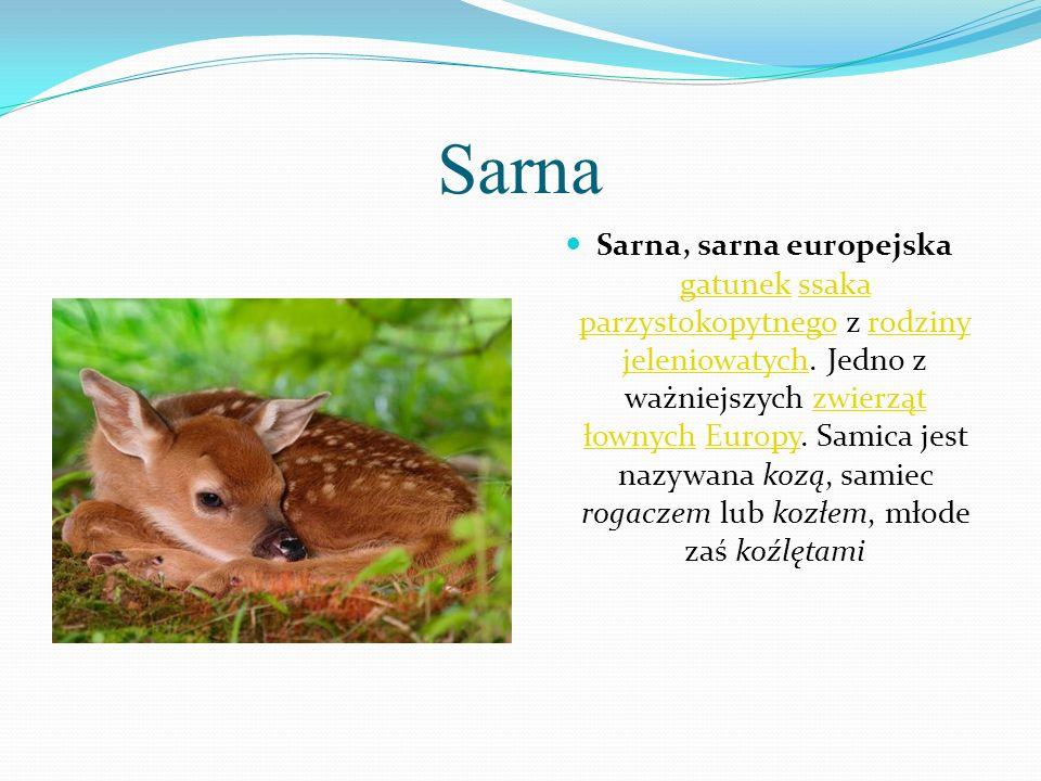 Sarna Sarna, sarna europejska gatunek ssaka parzystokopytnego z rodziny jeleniowatych. Jedno z ważniejszych zwierząt łownych Europy. Samica jest nazyw