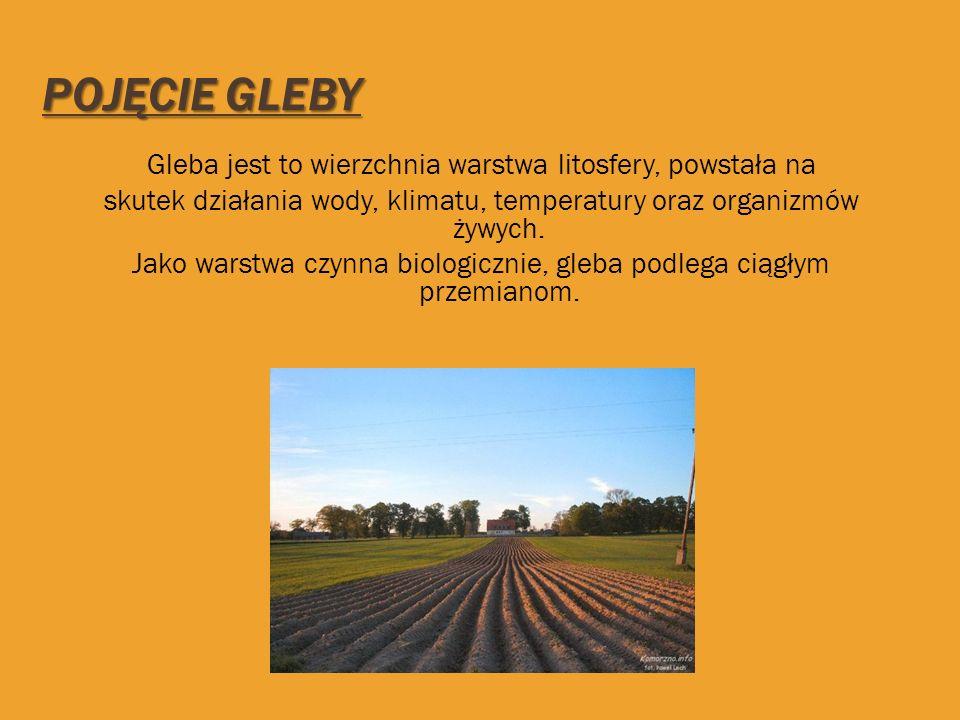 GLEBY OPADOWO-GLEJOWE Gleby opadowo-glejowe są to gleby astrefowe.