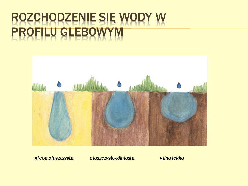 gleba piaszczysta, piaszczysto-gliniasta, glina lekka