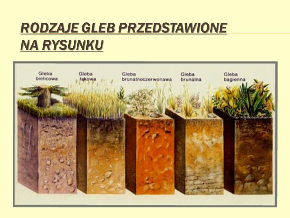 CZYNNIKI GLEBOTWÓRCZE Czynniki wpływające na proces glebotwórczy prowadzą do powstania i rozwoju określonych typów gleb.