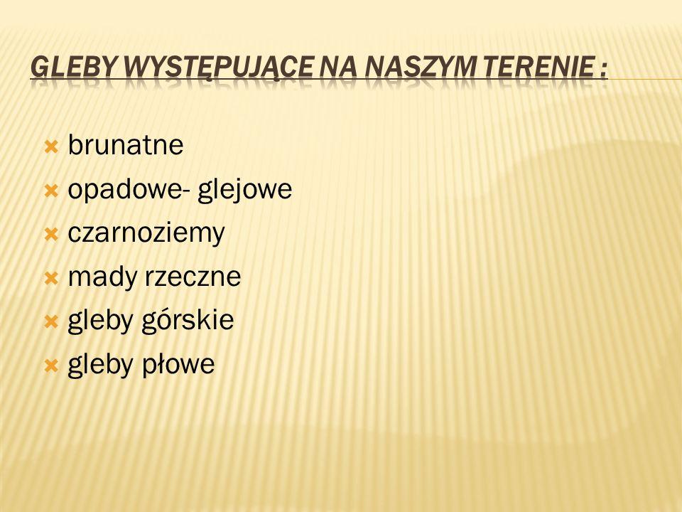 -W dolinach rzek Wisły, Sanu, Wisłoki i Wisłoka zalegają urodzajne mady.