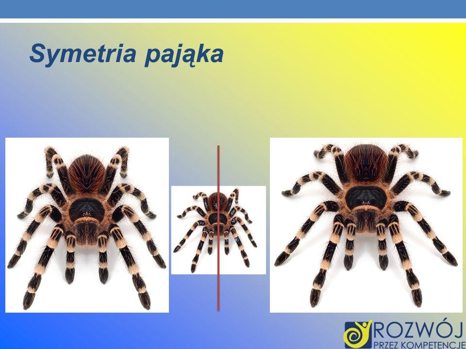 Symetria pająka