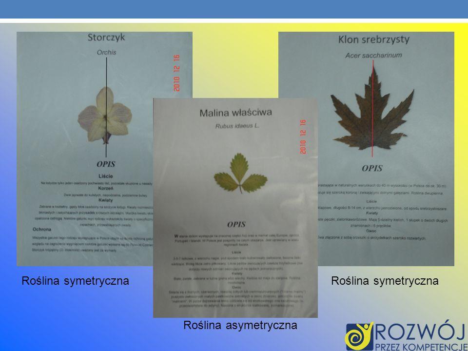 Roślina symetryczna Roślina asymetryczna