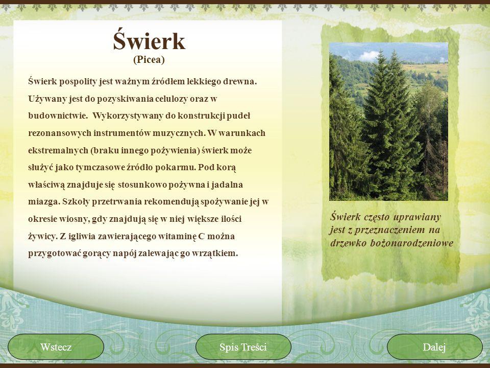 Świerk Świerk pospolity jest ważnym źródłem lekkiego drewna. Używany jest do pozyskiwania celulozy oraz w budownictwie. Wykorzystywany do konstrukcji