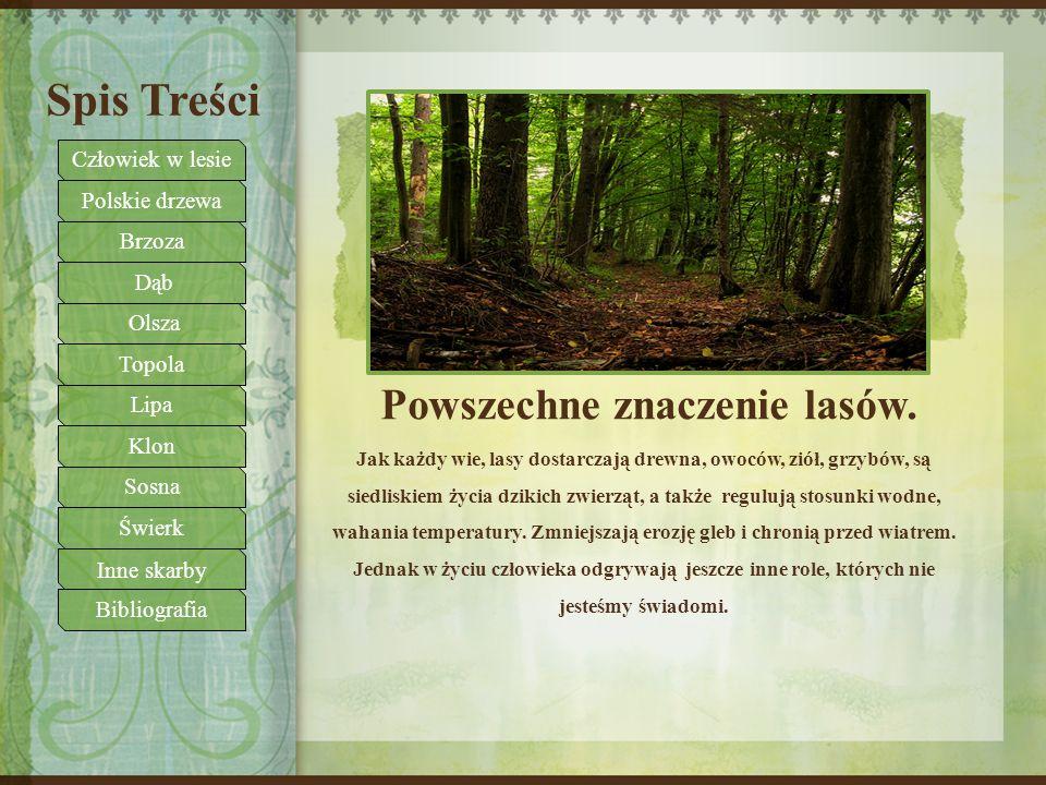 Spis Treści Powszechne znaczenie lasów. Jak każdy wie, lasy dostarczają drewna, owoców, ziół, grzybów, są siedliskiem życia dzikich zwierząt, a także