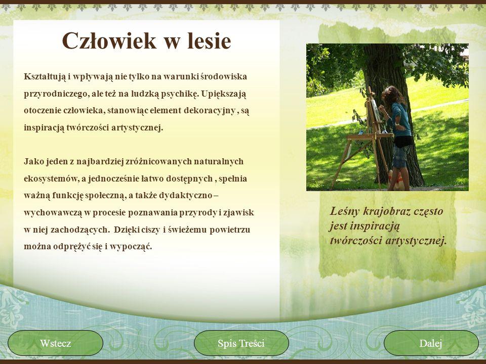Człowiek w lesie Kształtują i wpływają nie tylko na warunki środowiska przyrodniczego, ale też na ludzką psychikę. Upiększają otoczenie człowieka, sta