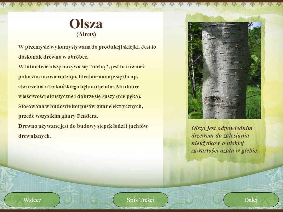 Olsza W przemyśle wykorzystywana do produkcji sklejki. Jest to doskonałe drewno w obróbce. W lutnictwie olszę nazywa się