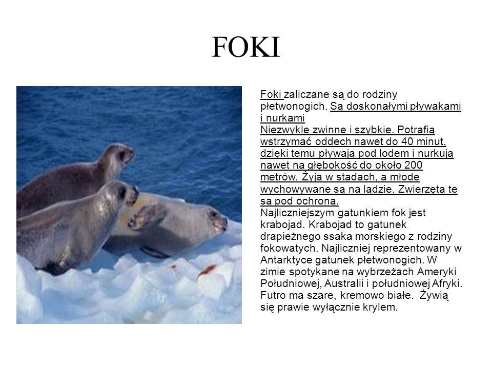 FOKI Foki zaliczane są do rodziny płetwonogich. Są doskonałymi pływakami i nurkami Niezwykle zwinne i szybkie. Potrafią wstrzymać oddech nawet do 40 m