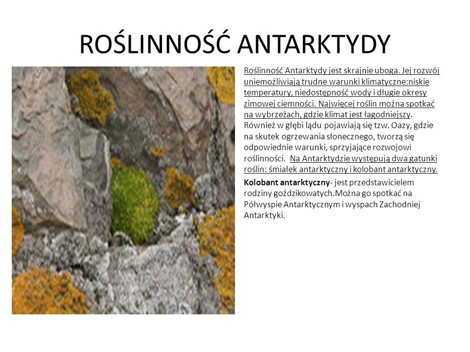 ROŚLINNOŚĆ ANTARKTYDY Roślinność Antarktydy jest skrajnie uboga. Jej rozwój uniemożliwiają trudne warunki klimatyczne:niskie temperatury, niedostępnoś
