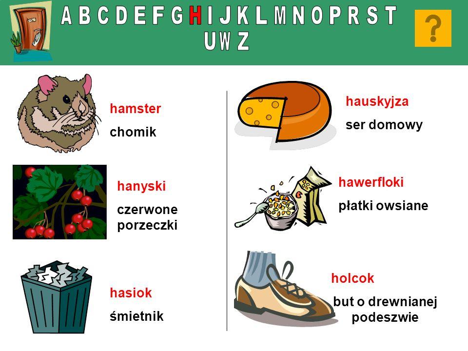 hamster chomik hasiok śmietnik hauskyjza ser domowy holcok but o drewnianej podeszwie hanyski czerwone porzeczki hawerfloki płatki owsiane
