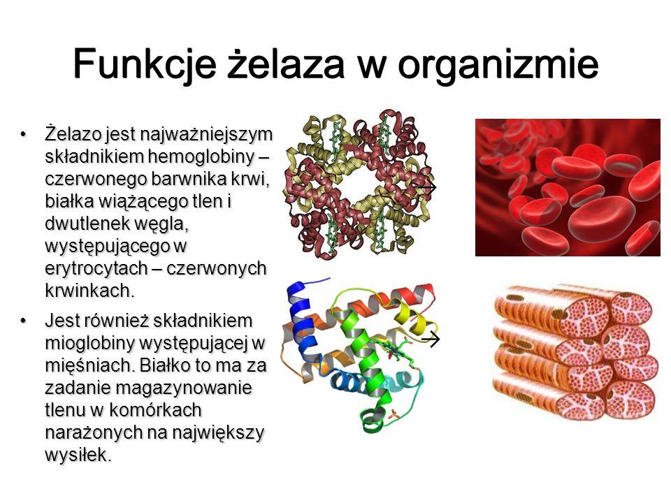 Funkcje żelaza w organizmie Żelazo jest najważniejszym składnikiem hemoglobiny – czerwonego barwnika krwi, białka wiążącego tlen i dwutlenek węgla, wy