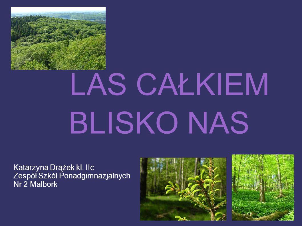 Lasy są bardzo ważnym elementem przyrody.W Polsce zajmują one 29% powierzchni kraju.