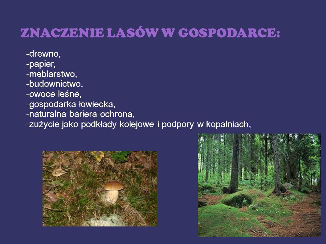 ZNACZENIE LASÓW W GOSPODARCE: -drewno, -papier, -meblarstwo, -budownictwo, -owoce leśne, -gospodarka łowiecka, -naturalna bariera ochrona, -zużycie ja