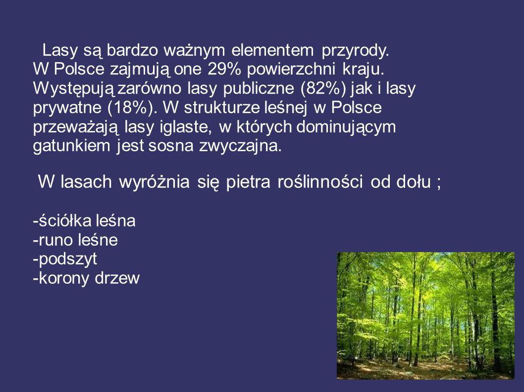 Lasy są bardzo ważnym elementem przyrody. W Polsce zajmują one 29% powierzchni kraju. Występują zarówno lasy publiczne (82%) jak i lasy prywatne (18%)