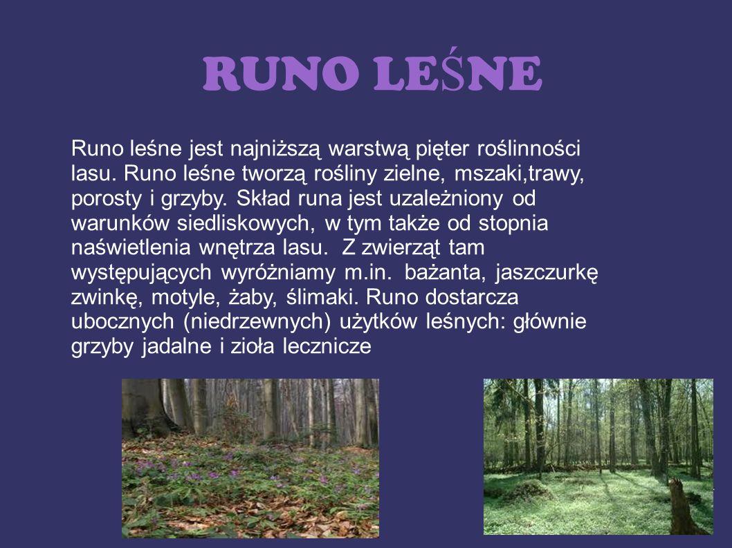 RUNO LE Ś NE Runo leśne jest najniższą warstwą pięter roślinności lasu. Runo leśne tworzą rośliny zielne, mszaki,trawy, porosty i grzyby. Skład runa j