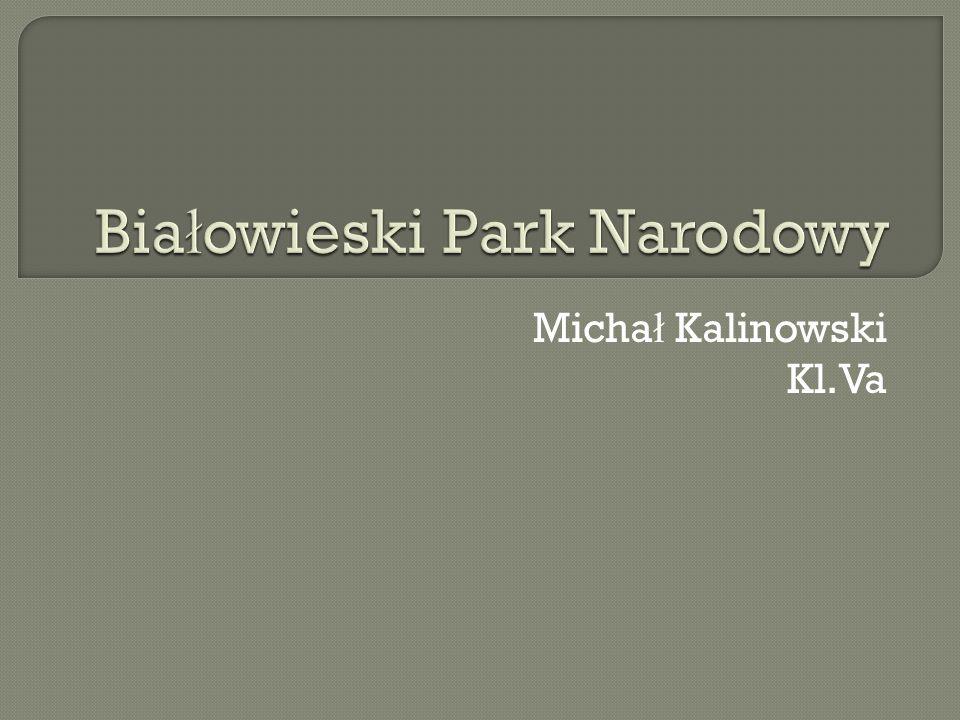 Micha ł Kalinowski Kl.Va