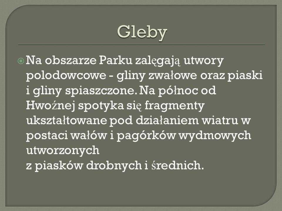 Na terenie Bia ł owieskiego Parku Narodowego dominuj ą zbiorowiska le ś ne.