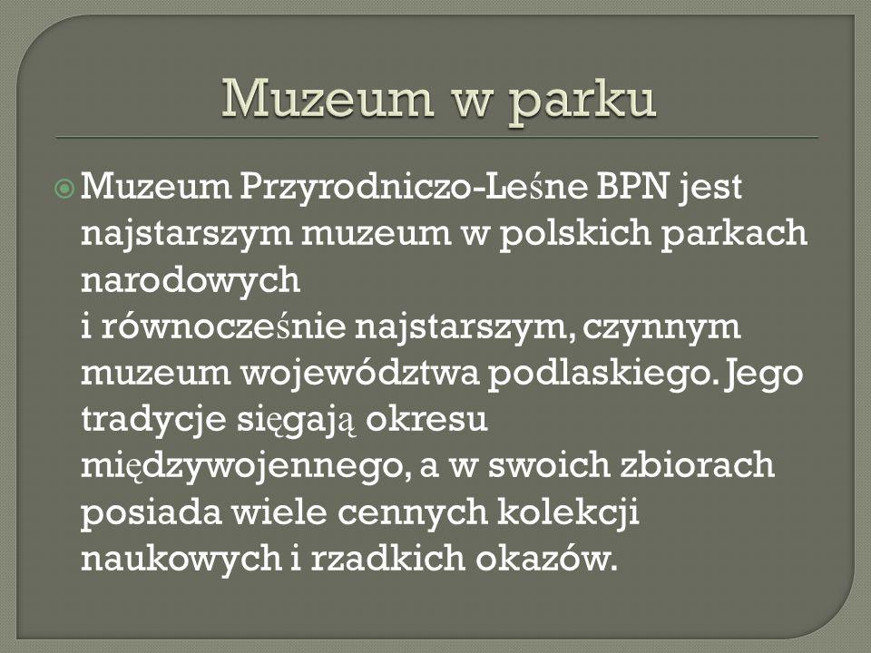 Muzeum Przyrodniczo-Le ś ne BPN jest najstarszym muzeum w polskich parkach narodowych i równocze ś nie najstarszym, czynnym muzeum województwa podlask