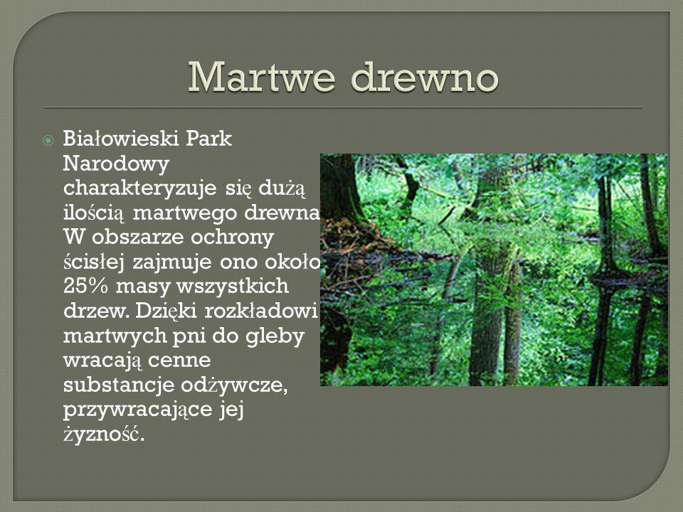 Bia ł owieski Park Narodowy charakteryzuje si ę du żą ilo ś ci ą martwego drewna. W obszarze ochrony ś cis ł ej zajmuje ono oko ł o 25% masy wszystkic