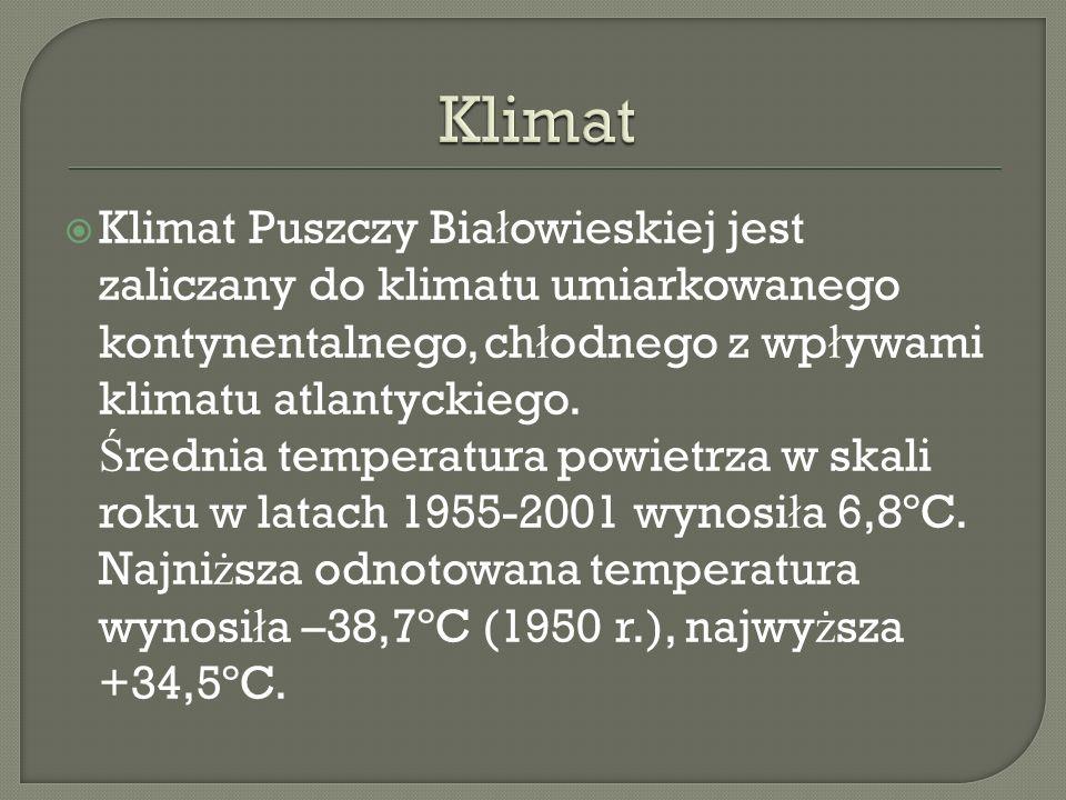 Klimat Puszczy Bia ł owieskiej jest zaliczany do klimatu umiarkowanego kontynentalnego, ch ł odnego z wp ł ywami klimatu atlantyckiego. Ś rednia tempe