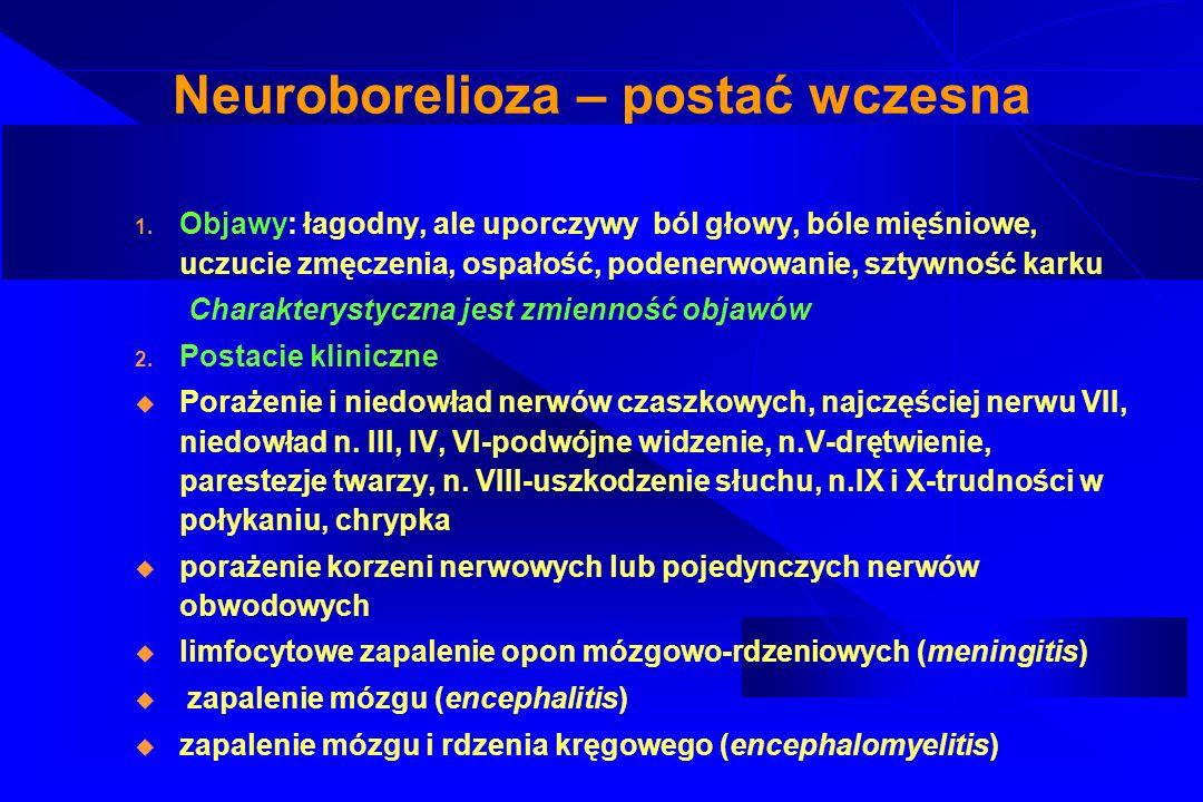 Neuroborelioza późna u zapalenie mózgu i rdzenia kręgowego (encephalomyelitis) o powolnym, postępującym przebiegu z zajęciem istoty białej.