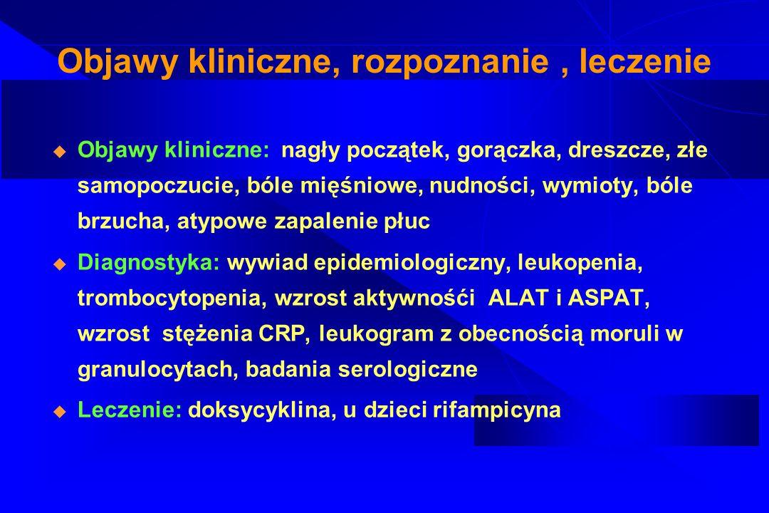 Objawy kliniczne, rozpoznanie, leczenie Objawy kliniczne: nagły początek, gorączka, dreszcze, złe samopoczucie, bóle mięśniowe, nudności, wymioty, ból
