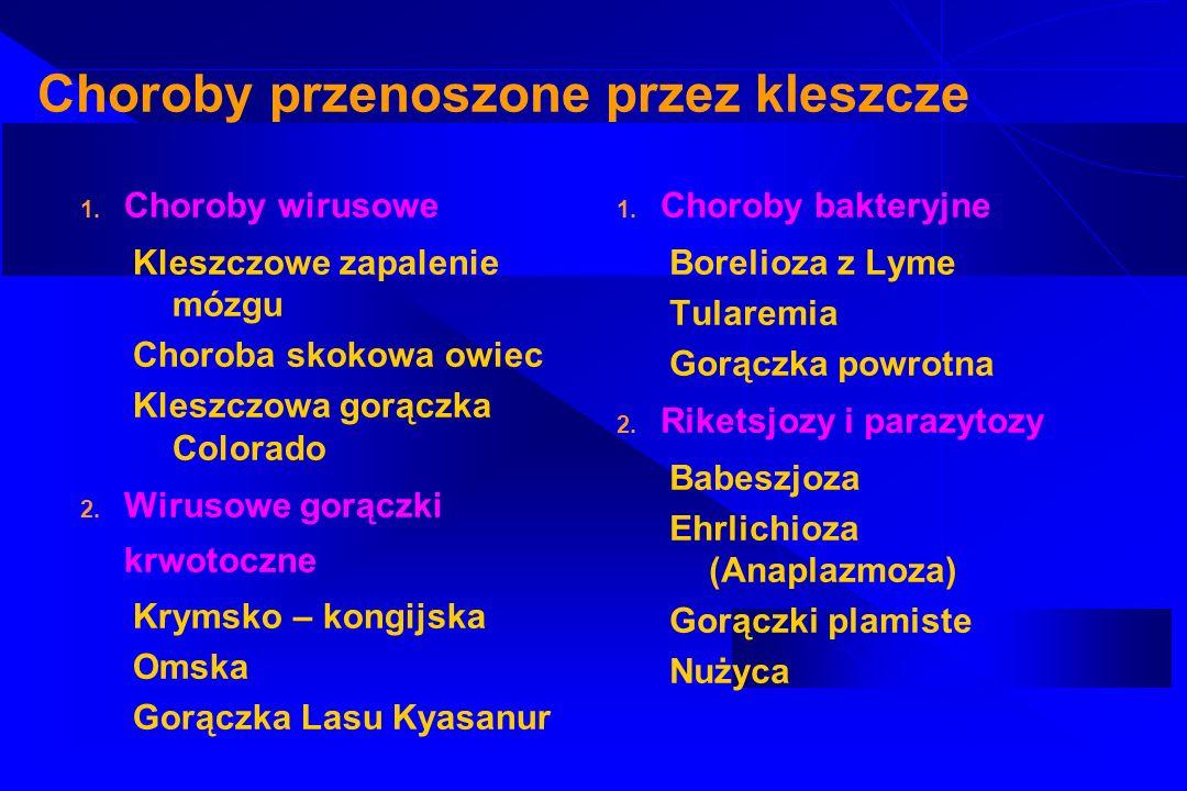 Borelioza z Lyme (krętkowica kleszczowa) Przewlekła wieloukładowa, wielofazowa choroba odzwierzęca, wywołana przez krętki przenoszone przez kleszcze ( w Polsce Ixodes ricinus i Ixodes persulcatus) Rezerwuarem kleszczy są drobne gryzonie, jaszczurki, ptaki,duże ssaki Krętki - bakterie G ( -), spiralnie zwinięte o długości 20-30um Chorobotwórcze dla człowieka : Borrelia garinii, Borrelia afzeli – w Europie i w Polsce Borrelia burggorferi – w USA Krętki wykazują tropizm narządowy: B.garinii – neuroborelioza B.