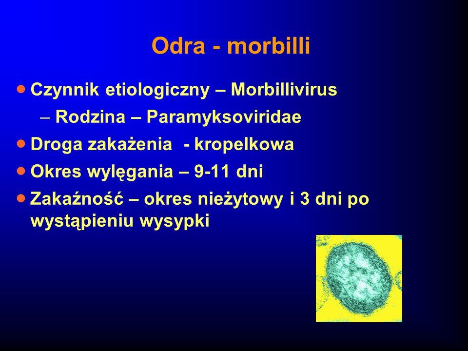Odra - morbilli Czynnik etiologiczny – Morbillivirus –Rodzina – Paramyksoviridae Droga zakażenia - kropelkowa Okres wylęgania – 9-11 dni Zakaźność – o