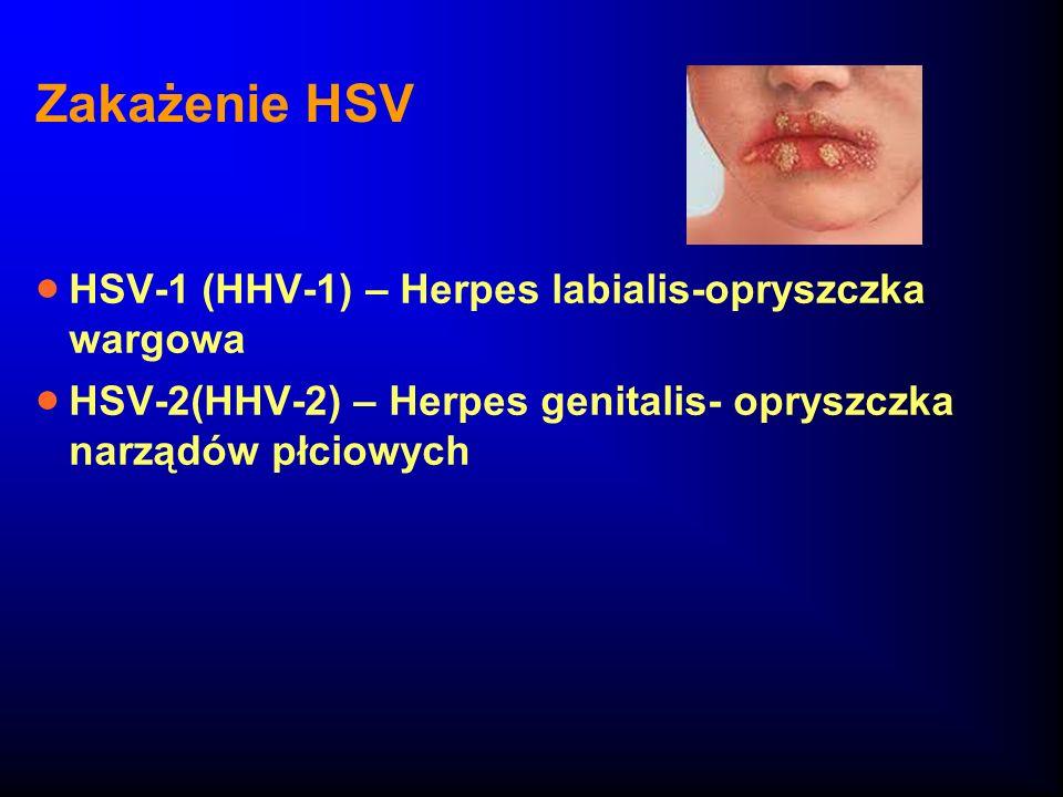 Zakażenie HSV HSV-1 (HHV-1) – Herpes labialis-opryszczka wargowa HSV-2(HHV-2) – Herpes genitalis- opryszczka narządów płciowych