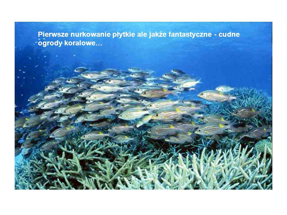 Pierwsze nurkowanie płytkie ale jakże fantastyczne - cudne ogrody koralowe…