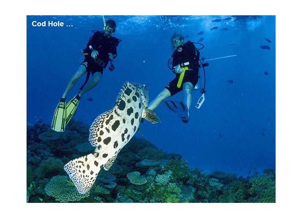 Cod Hole …