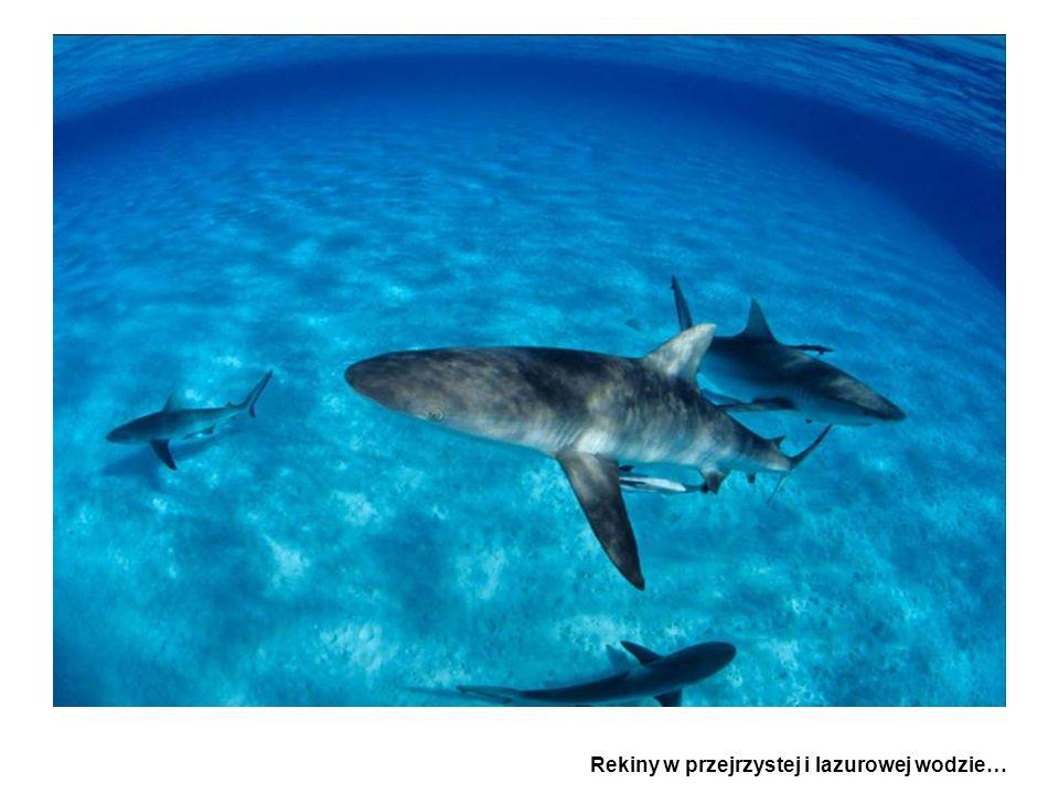 Rekiny w przejrzystej i lazurowej wodzie…