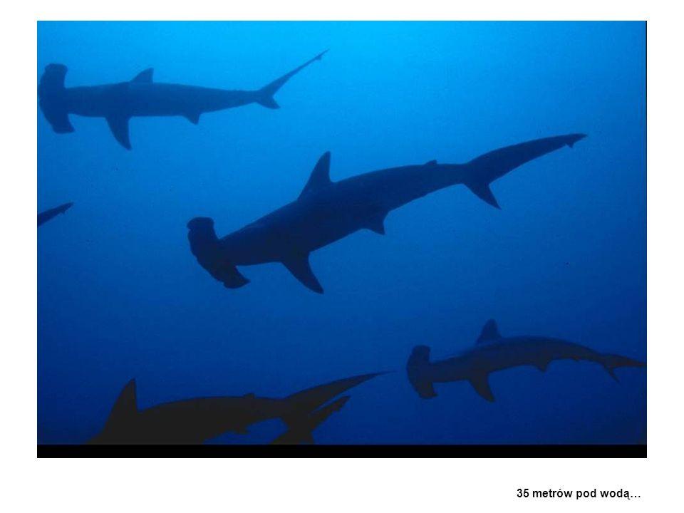35 metrów pod wodą…