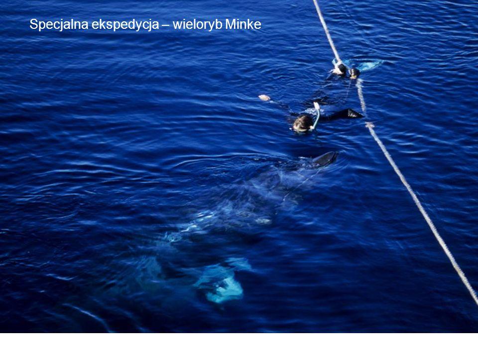 Specjalna ekspedycja – wieloryb Minke