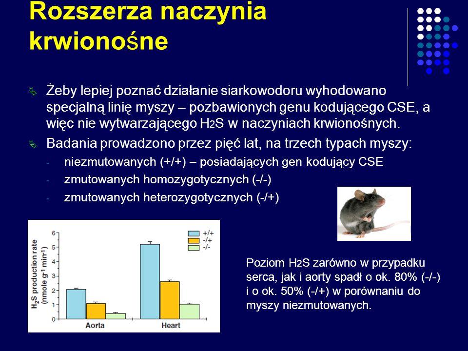 Rozszerza naczynia krwionośne Żeby lepiej poznać działanie siarkowodoru wyhodowano specjalną linię myszy – pozbawionych genu kodującego CSE, a więc ni