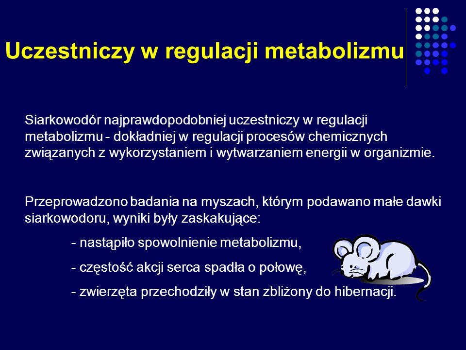 Uczestniczy w regulacji metabolizmu Siarkowodór najprawdopodobniej uczestniczy w regulacji metabolizmu - dokładniej w regulacji procesów chemicznych z