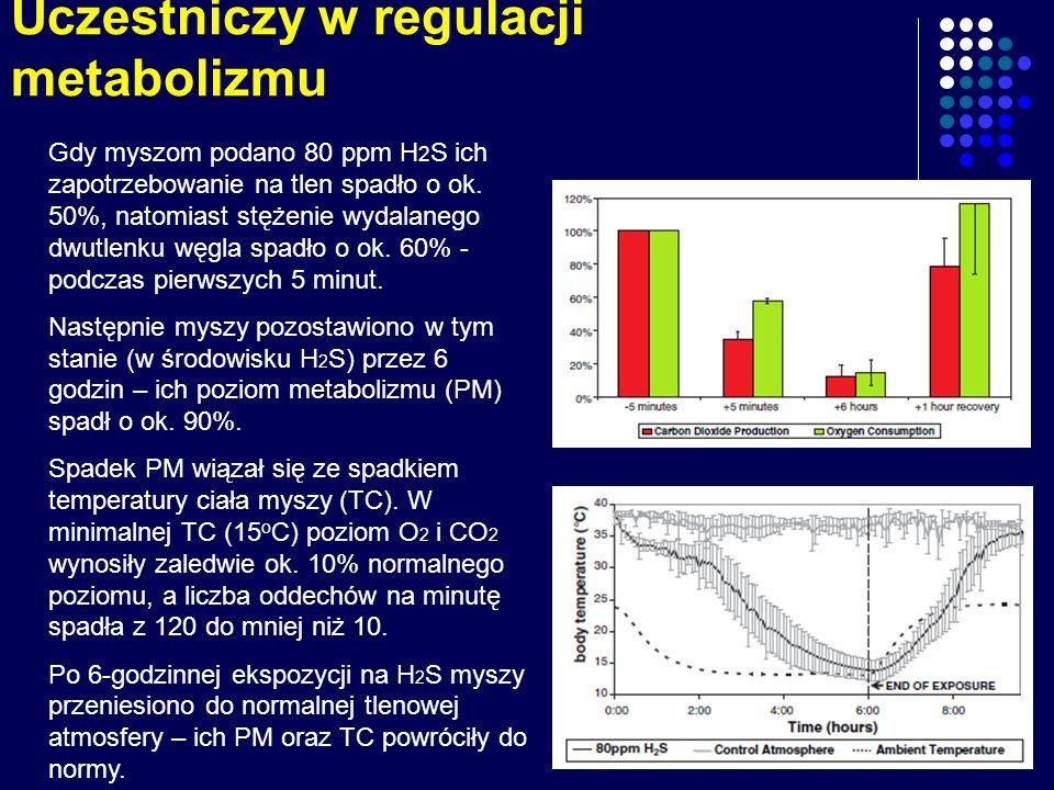 Uczestniczy w regulacji metabolizmu Gdy myszom podano 80 ppm H 2 S ich zapotrzebowanie na tlen spadło o ok. 50%, natomiast stężenie wydalanego dwutlen