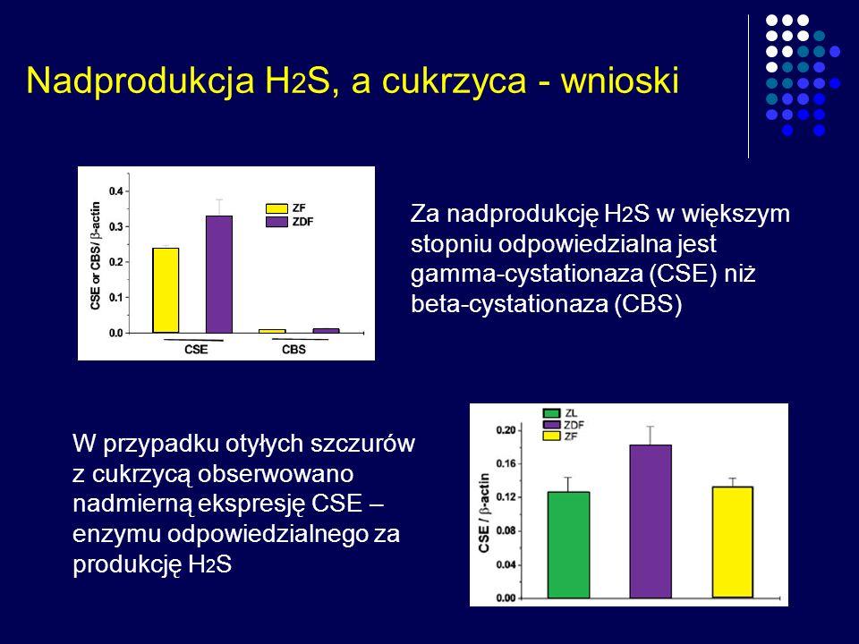Nadprodukcja H 2 S, a cukrzyca - wnioski Za nadprodukcję H 2 S w większym stopniu odpowiedzialna jest gamma-cystationaza (CSE) niż beta-cystationaza (