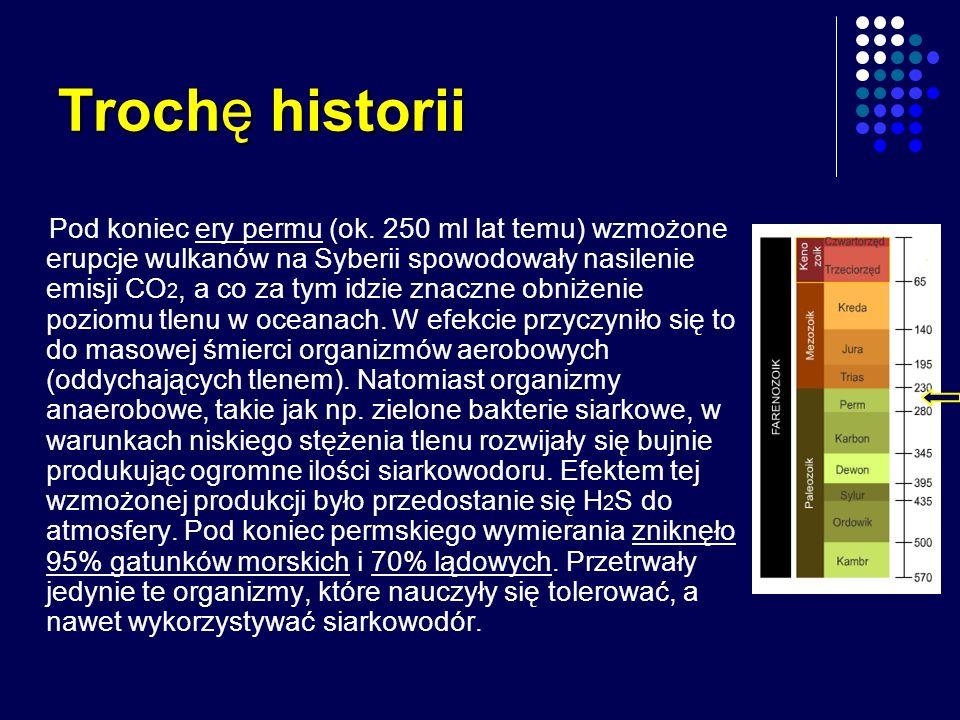 Trochę historii Pod koniec ery permu (ok. 250 ml lat temu) wzmożone erupcje wulkanów na Syberii spowodowały nasilenie emisji CO 2, a co za tym idzie z