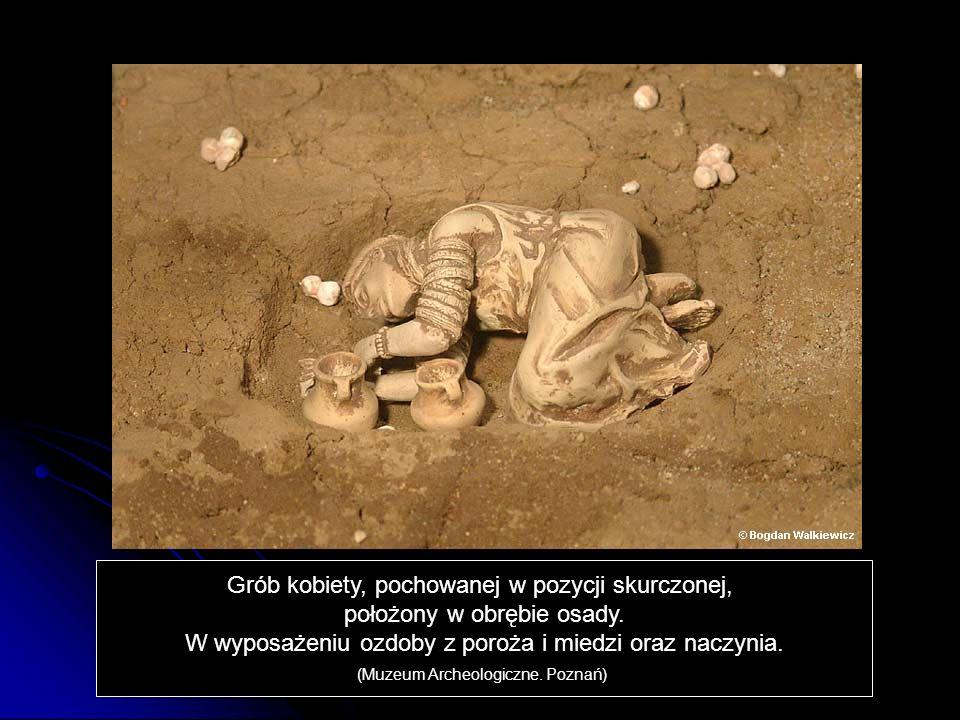 Grób kobiety, pochowanej w pozycji skurczonej, położony w obrębie osady. W wyposażeniu ozdoby z poroża i miedzi oraz naczynia. (Muzeum Archeologiczne.